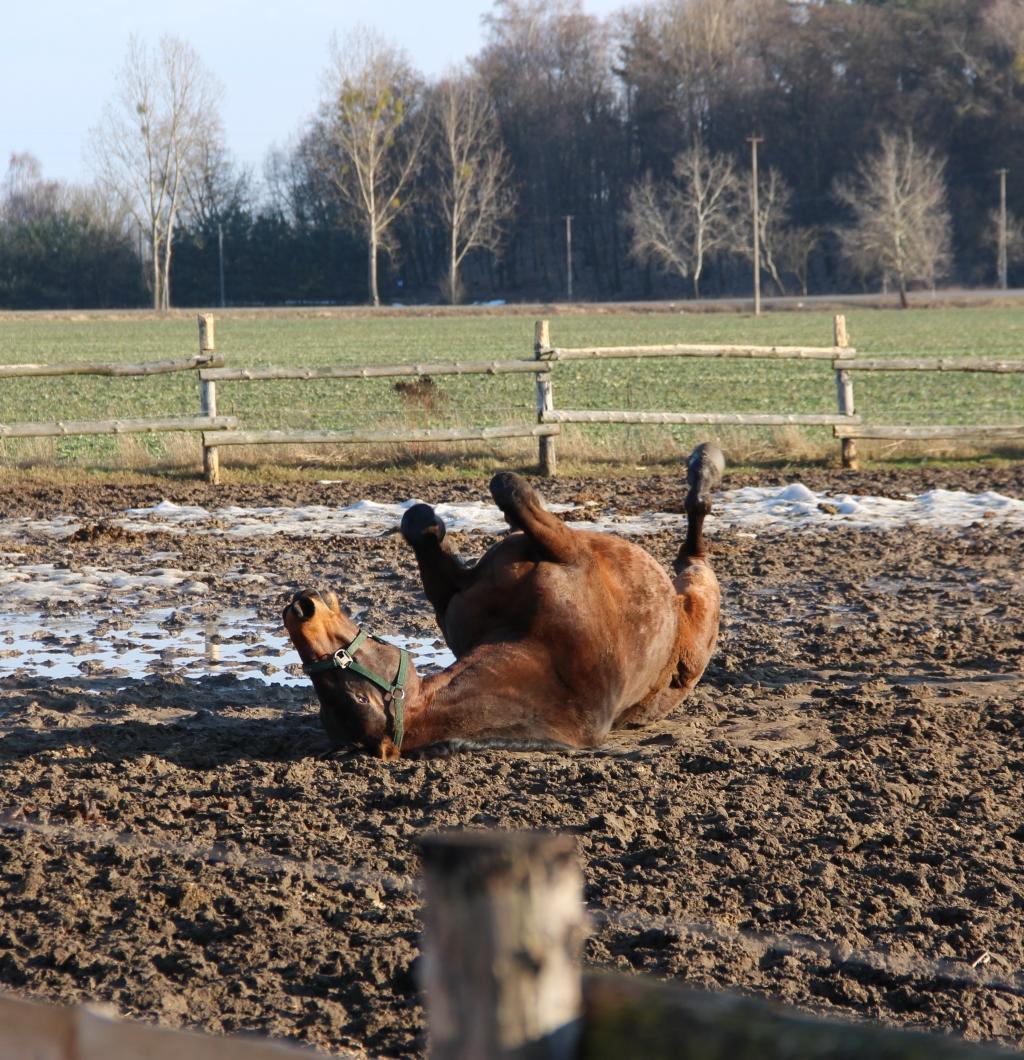 horse spa2