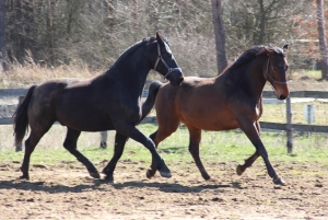 Weto and Nazir, April 2016. Looking good!!!