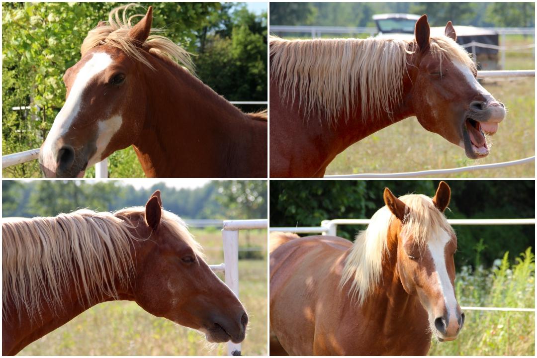 Calming signals and language signs horses
